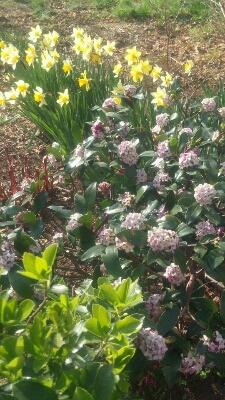 春到来♪_a0153945_1352195.jpg