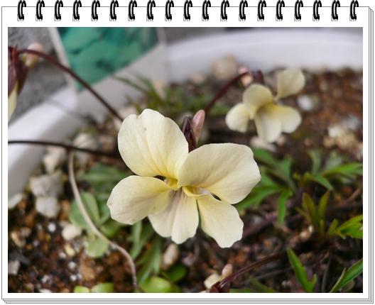 春のフォトブック_c0069048_15151880.jpg