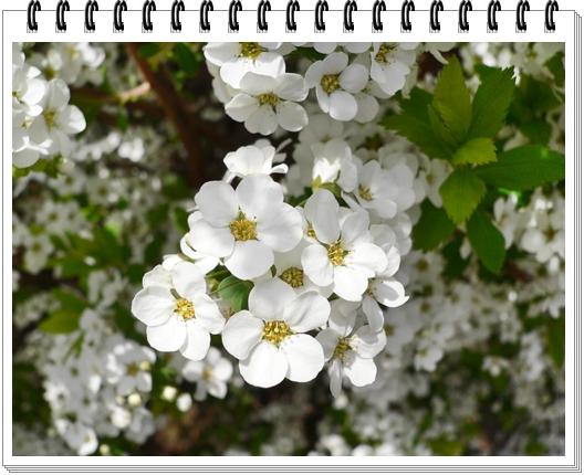 春のフォトブック_c0069048_15154188.jpg