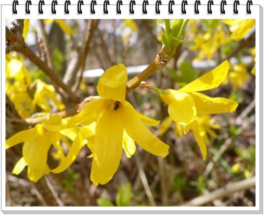春のフォトブック_c0069048_15155099.jpg