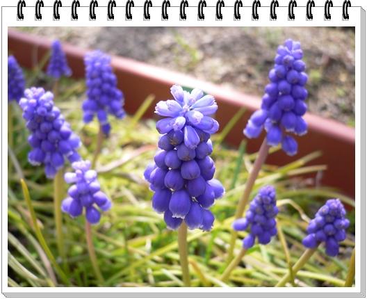 春のフォトブック_c0069048_1515615.jpg