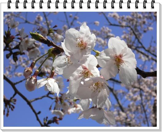 春のフォトブック_c0069048_1516192.jpg