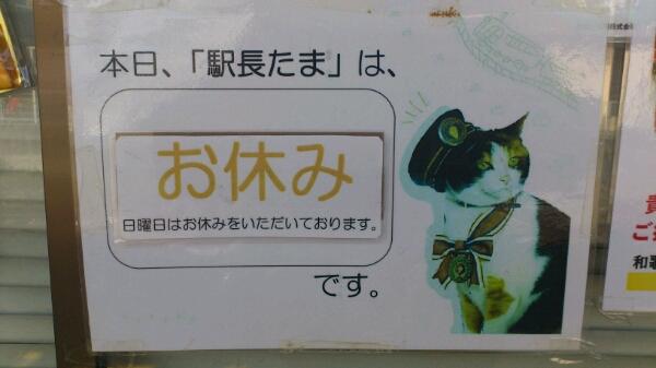 三毛猫の『ニタマ』_d0249867_1135657.jpg