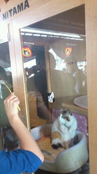 三毛猫の『ニタマ』_d0249867_12475328.jpg