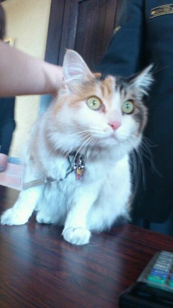 三毛猫の『ニタマ』_d0249867_18455815.jpg