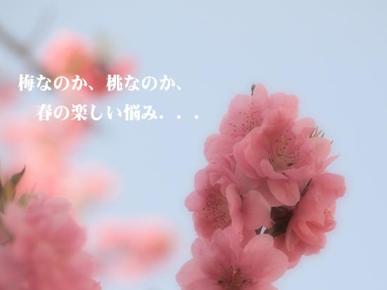 c0173670_11475743.jpg