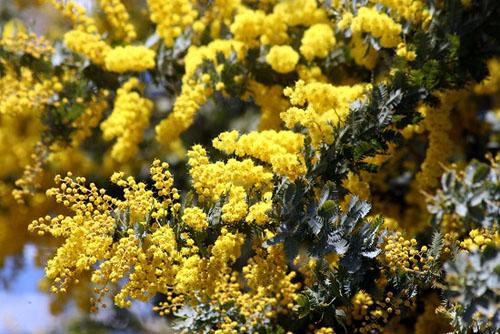 黄色い花と、ときどき猫_f0030085_19234166.jpg