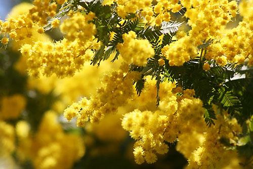 黄色い花と、ときどき猫_f0030085_1924323.jpg