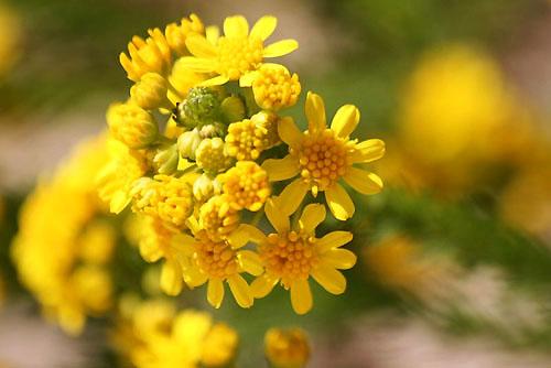 黄色い花と、ときどき猫_f0030085_19262553.jpg
