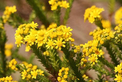 黄色い花と、ときどき猫_f0030085_19264150.jpg
