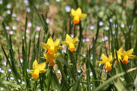 黄色い花と、ときどき猫_f0030085_19275137.jpg