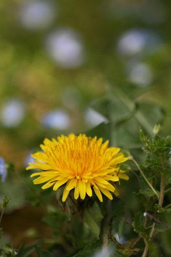 黄色い花と、ときどき猫_f0030085_19283450.jpg