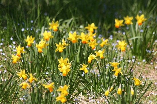 黄色い花と、ときどき猫_f0030085_1928759.jpg
