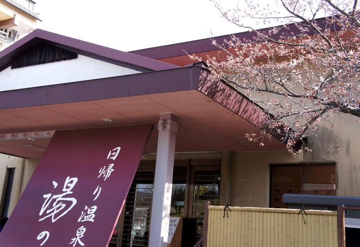 糸桜と温泉桜_b0145296_72093.jpg