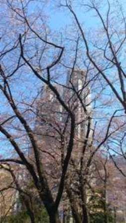 桜を眺めて、お散歩_d0018315_19222336.jpg