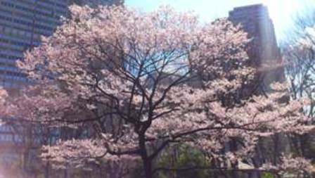 桜を眺めて、お散歩_d0018315_1923204.jpg