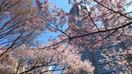 桜を眺めて、お散歩_d0018315_19233798.jpg