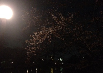 万代池の夜桜_e0103024_22132781.jpg