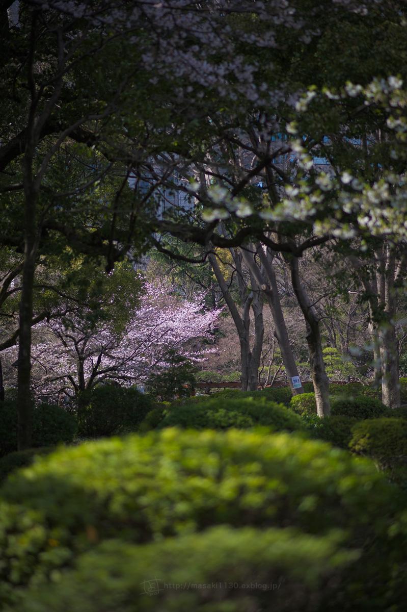 120404-日比谷公園で桜でも...。(現実逃避ともいう...)_e0096928_1644143.jpg