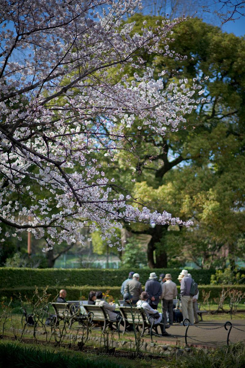 120404-日比谷公園で桜でも...。(現実逃避ともいう...)_e0096928_1654236.jpg