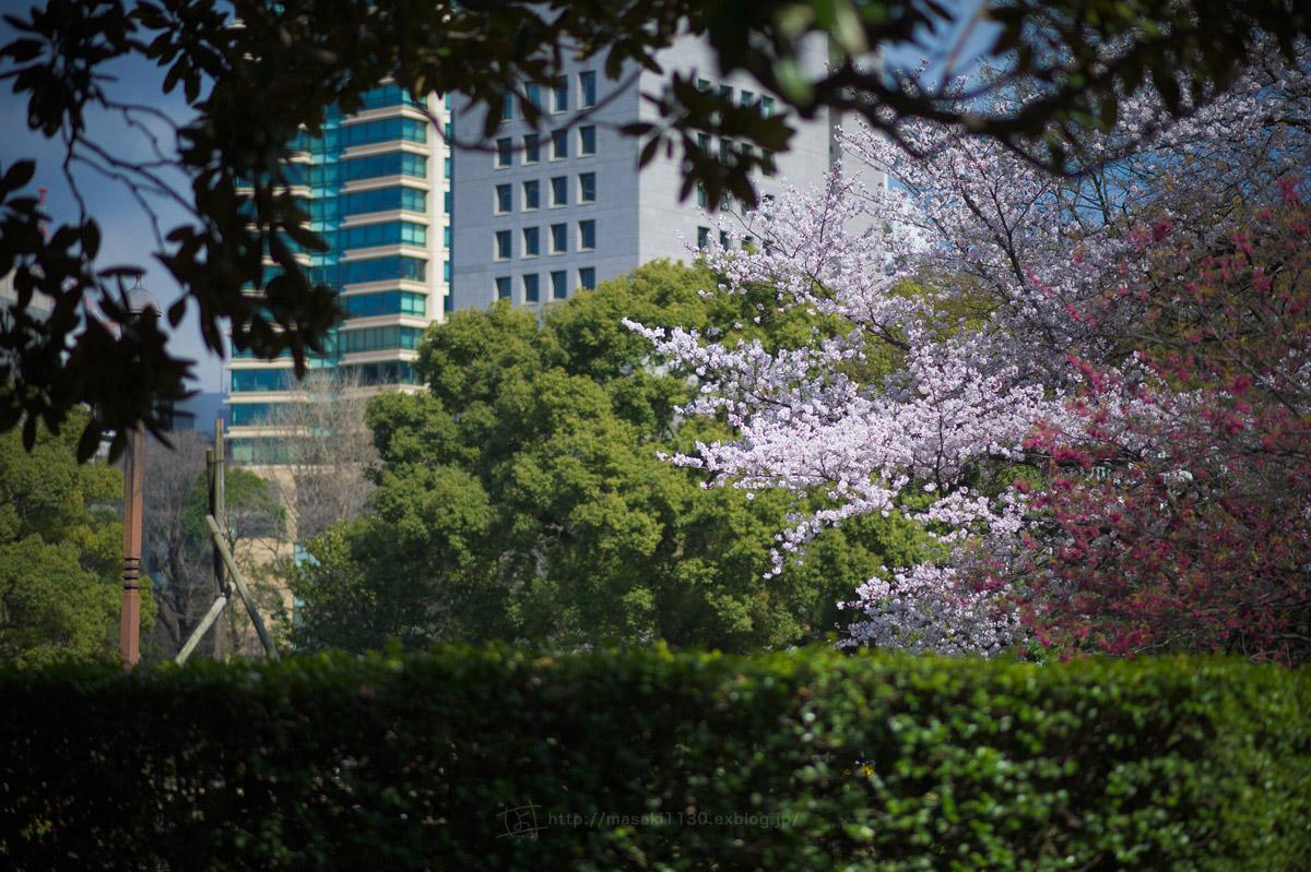 120404-日比谷公園で桜でも...。(現実逃避ともいう...)_e0096928_1655217.jpg