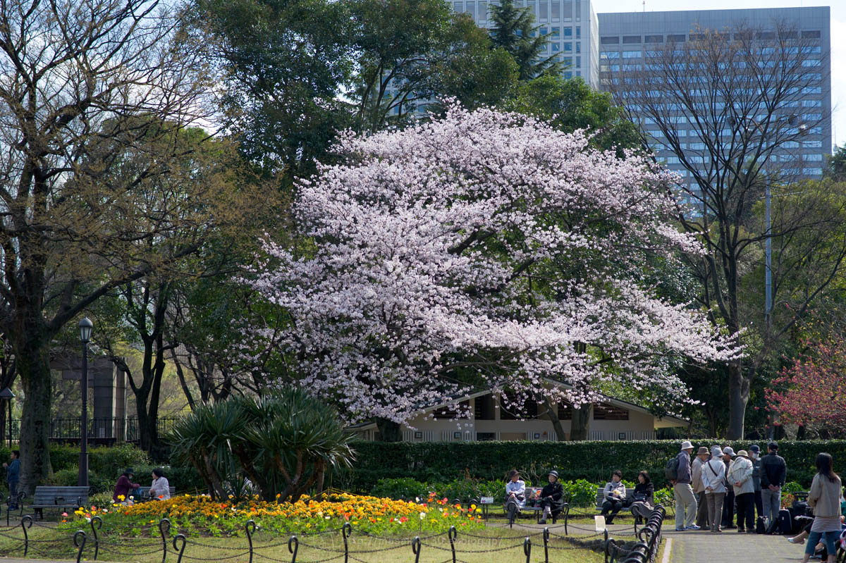 120404-日比谷公園で桜でも...。(現実逃避ともいう...)_e0096928_166425.jpg