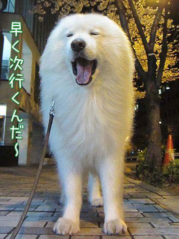 夜桜散歩_c0062832_5382186.jpg