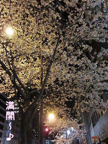夜桜散歩_c0062832_538291.jpg