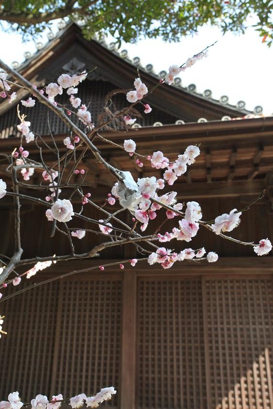 八坂神社 神前式_d0230676_14414046.jpg
