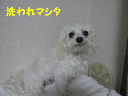b0193480_15263938.jpg