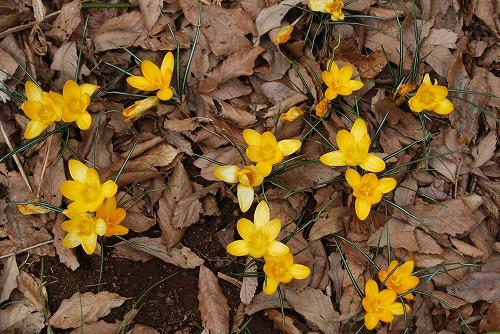 動き出した春の花編_c0124100_0133762.jpg
