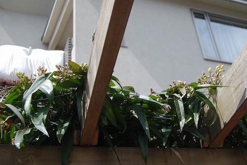 動き出した春の花編_c0124100_013458.jpg