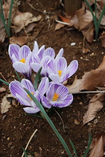 動き出した春の花編_c0124100_014377.jpg