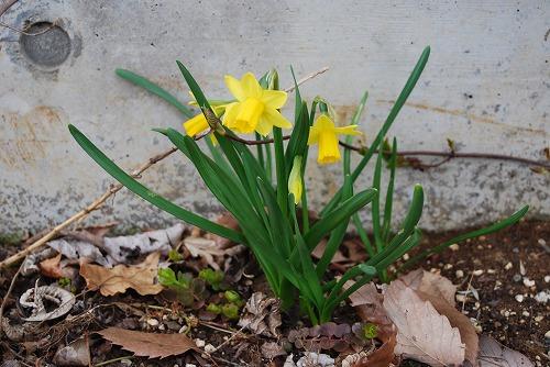 動き出した春の花編_c0124100_0145657.jpg