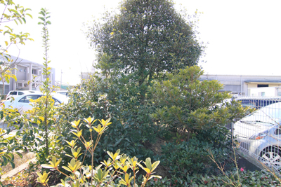 植樹のその後「2年6ヶ月の姿」_b0186205_1543950.jpg
