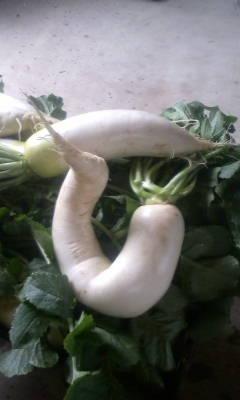 何の野菜でしょ?_d0026905_1011594.jpg