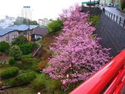 熱川温泉(23日~24日)_a0036808_1283417.jpg