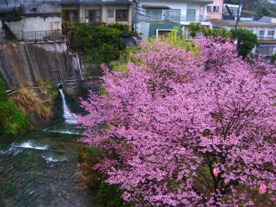 熱川温泉(23日~24日)_a0036808_128874.jpg