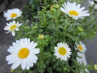 春の花々・・・。_d0091909_12365230.jpg