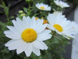 春の花々・・・。_d0091909_12395060.jpg