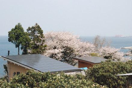 桜が満開の小坂農園でビワの袋かけが始まりました_d0174710_211773.jpg