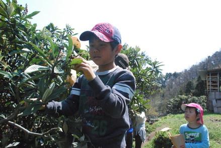 桜が満開の小坂農園でビワの袋かけが始まりました_d0174710_21182878.jpg