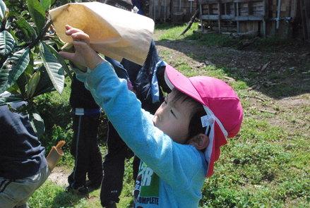 桜が満開の小坂農園でビワの袋かけが始まりました_d0174710_21184657.jpg