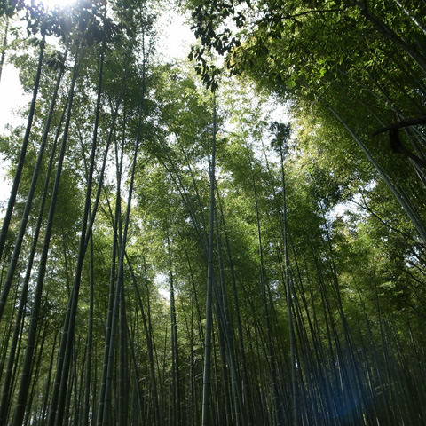 京都へ行ってきました♪ その3『嵯峨野・竹林の道』編_e0131432_10223443.jpg