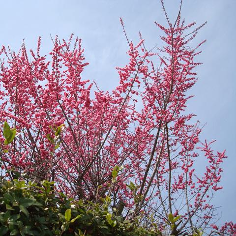 京都へ行ってきました♪ その3『嵯峨野・竹林の道』編_e0131432_10235879.jpg
