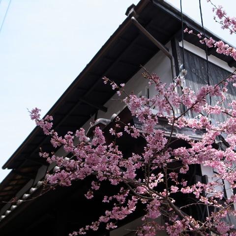 京都へ行ってきました♪ その3『嵯峨野・竹林の道』編_e0131432_10241190.jpg