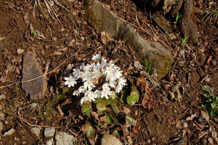 春の香り_d0249047_16322787.jpg