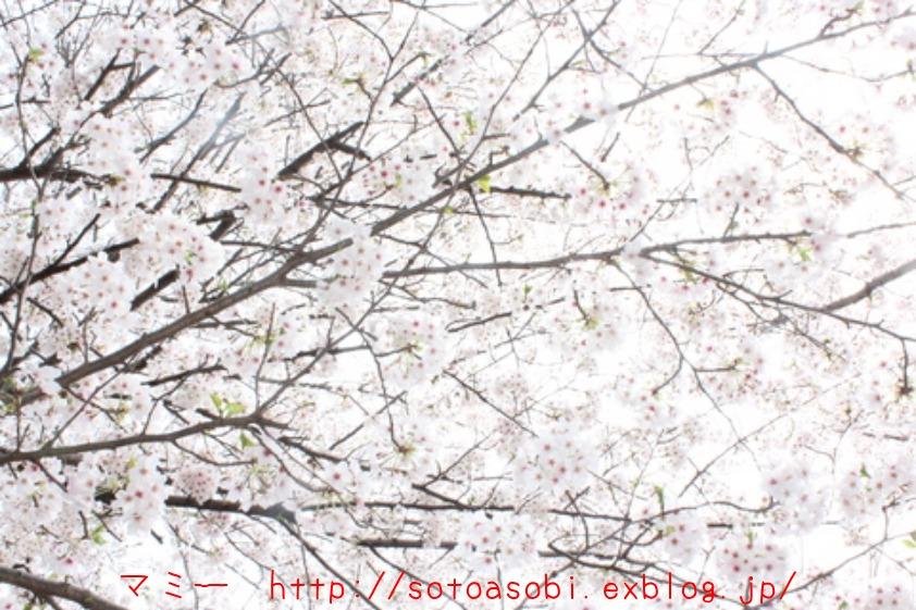d0105749_1750663.jpg