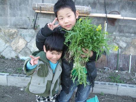 我が家の畑7 収穫_d0191262_22593511.jpg