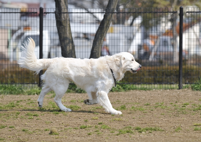 篠崎公園・ドッグラン_f0018464_651837.jpg
